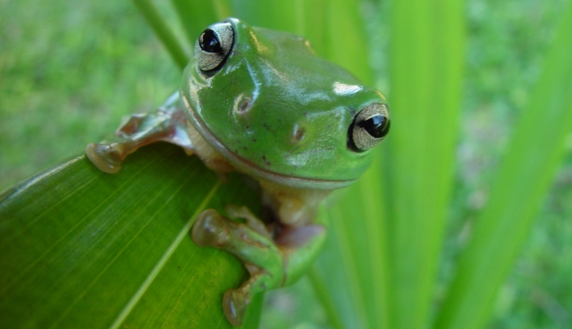 Candid Frog